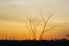 tree_silhouette_in_the_afternoon_01 images stock