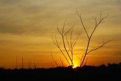 tree_silhouette_in_the_afternoon_07 photographie stock libre de droits