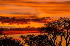 Tree silhouette against African sunset. Tree silhouette against orange and red African sunset Stock Photo