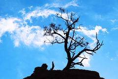 Tree silhouette. Against blue sky Royalty Free Stock Photo