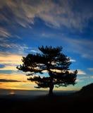Tree silhouette Stock Photos