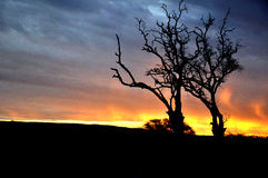 Tree silhouette against a evening sunrise Stock Photo