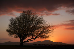 Tree silhouette against fiery beautiful sunset Stock Photos
