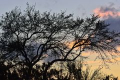 Tree silhouette against the setting sun. Stock Image