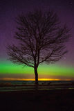 Tree silhouette against starry sky with some northern lights. Alone tree silhouette at seacoast against starry sky with some northern lights Royalty Free Stock Photo