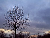 Tree silhouette against a winter sunset Royalty Free Stock Photography