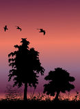 Tree silhouette background. And birds flying, with place for your text Royalty Free Stock Images
