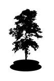 a tree silhouette Royalty Free Stock Images