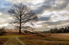 Tree silhouette with bare branches on the slope of a small hill stock photography