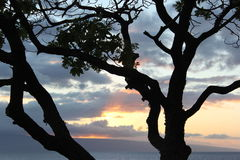 Tree Silhouette. A silhouette of a tree with a beautiful sunset in the background royalty free stock images