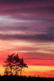 Tree silhouette and beautiful vibrant sunset clouds. Background royalty free stock images