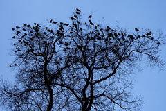 Tree silhouette with birds. Grunge tree silhouette with a lot of creepy birds sitting on it Royalty Free Stock Images