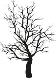 Tree Silhouette. Black silhouette of a bare tree  on white background Stock Photography