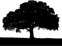 Tree Silhouette black & white colors. Stock Photos