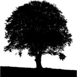 Tree Silhouette black & white colors. Stock Photo