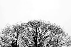 Tree. Silhouette black & white colors isolated on white background Royalty Free Stock Photos