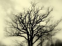 Tree silhouette bw Stock Photography