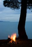 Tree silhouette and campfire Royalty Free Stock Photos