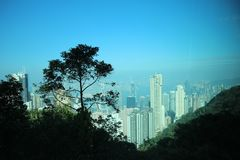 Tree silhouette with city view stock photography