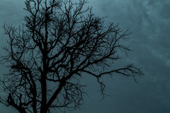 A tree silhouette Stock Images