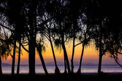 Tree silhouette. Color full of sunset and tree silhouette Stock Images