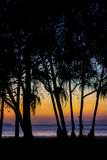 Tree silhouette2. Color full of sunset and tree silhouette Stock Images