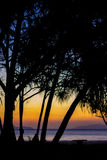 Tree silhouette3. Color full of sunset and tree silhouette Stock Photo