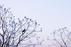 Tree silhouette with a crow Royalty Free Stock Images
