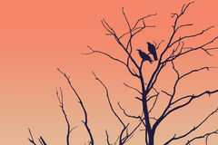 Tree silhouette with a crow. On november cold autumn sunset Stock Photo