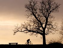 Tree silhouette and cyclist Stock Photo