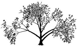 Tree Silhouette Royalty Free Stock Photo