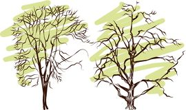 Tree silhouette - detailed vector Stock Photo