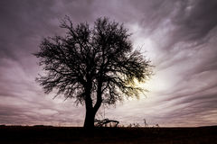 Tree Silhouette with Dramatic Sky. Royalty Free Stock Photo