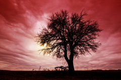 Tree Silhouette with Dramatic Sky. Wide Angle View royalty free stock image