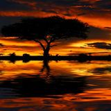 Tree silhouette and dramatic sunset. Africa. Kenya. Masai Mara Stock Photo