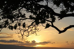 Tree Silhouette. A silhouette of a tree at dusk royalty free stock photo