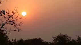 The tree silhouette. In the evening, the tree silhouette, very beautiful stock footage