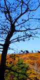 Tree silhouette with fall colors. In Beartown State Forest, Berkshire County, Massachusetts. Late afternoon stock photo