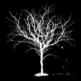 Tree silhouette with fallen leaves. Stock Photos