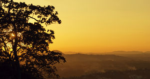 Tree silhouette and foggy hills at sunset Royalty Free Stock Photos