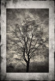 Tree silhouette in frame Royalty Free Stock Images