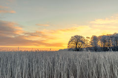 Tree silhouette on a frosty field Royalty Free Stock Photography