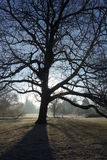 Tree Silhouette on Frosty Morning Stock Photo