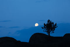 Tree silhouette and full moon Royalty Free Stock Photo