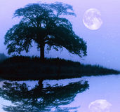 Tree silhouette and full moon Stock Photo