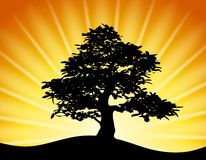 Tree Silhouette Gold Sunset Rays. An illustration featuring the black outline silhouette of a tree on a hill at sunset with rays of golden light in the Stock Photo