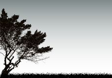 Tree silhouette and grass. Vector background Stock Images