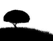 Tree Silhouette on Grassy Hill Stock Photos