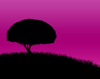 Tree Silhouette on Grassy Hill Royalty Free Stock Photography