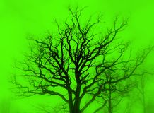 Tree silhouette green. Bare oak tree silhouette in green mist. Soft focus filter Royalty Free Stock Photography